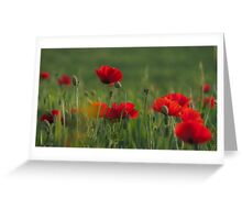 Poppies' dance. Greeting Card