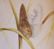 water colour of blue butterfly by robmac