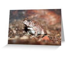Red-spotted Toad Greeting Card