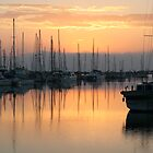 Manly Boat Harbour Sunrise by Helen Phillips
