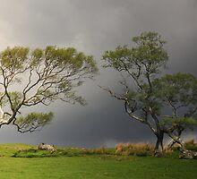 Walltown trees. by Billlee