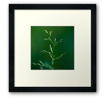Tiny Tree.  Framed Print