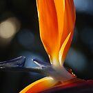 Sun Bird by Catherine Davis