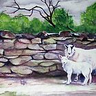 Cumbrian Sheep by artgoddess