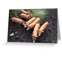 Seven little pigs Greeting Card