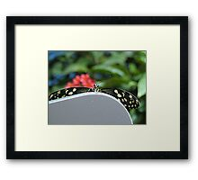 Hello There Flutterby Framed Print