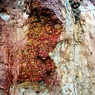 Rock patterns, Mornington Peninsula by Roz McQuillan