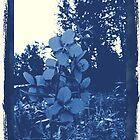 Vintage Flower by HillbillyDlux