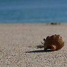 Lone Crab by Bronwyn Houston