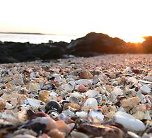 Shells at Sunset by Bronwyn Houston