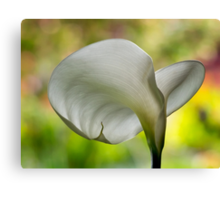 Elegant calla against nature's painted backdrop Canvas Print