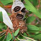Face of a Banksia by Penny Smith