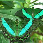 Papilio Palinurus by wayatsagi