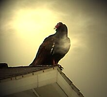 Buzzard on a hot tin roof by Terry Schock