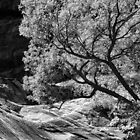 TREE IN ZION by dgcheney