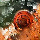 Morning impression with snail shell by JBlaminsky