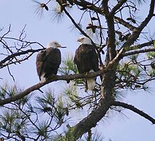 Mr. & Mrs. Eagle by LaurieRyan