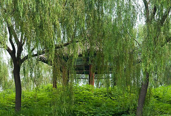 Weeping willow by dominiquelandau