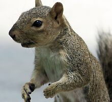 Smore (Mama) making her case for more nuts by Lenny La Rue, IPA