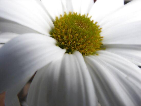 Just another Flower shot. Hmmm by Susan Zohn