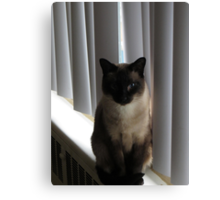 Merlin At The Window Canvas Print