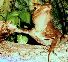 From A Lizards Perspective by gayle hoskins-nestor
