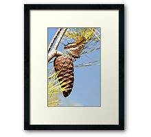 Two-tailed Pasha (Charaxes jasius) Framed Print