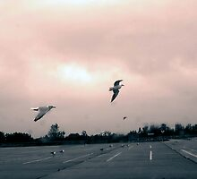 Seagulls on Jones Beach, NY by Daniel Sorine