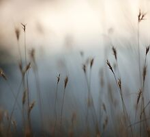 Selective focus on a plant in a wild field  by PhotoStock-Isra