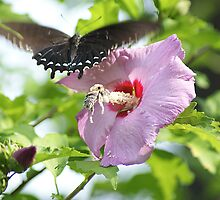 Rick Friedle's Butterflies,Birds,and Wildlife 2015 Calendar by Rick  Friedle