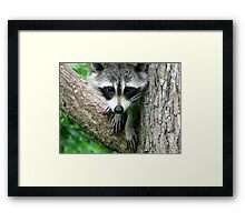 RACCOON PORTRAIT WITH PAWS & CLAWS  Framed Print