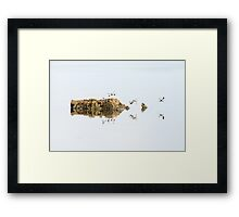 Banded Groundling dragonfly hovering over water with a head of a softshell turtle  Framed Print