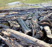 NOLA Oil Spill: The Timbers by WB7PTR