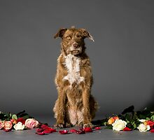 sitting brown dog with flowers on the set by PhotoStock-Isra