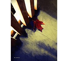 Last Leaf Photographic Print