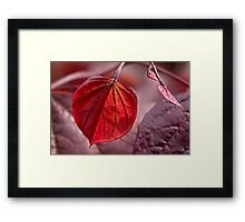 Leafing out in red Framed Print