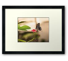 Butterfly on a red flower Framed Print