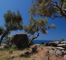 Twisting Olives by Swell Photography