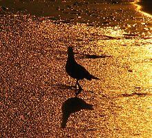 Golden sunset at Avila Beach, California by shoim