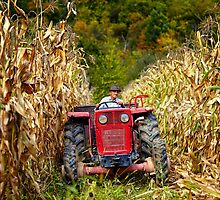 Old farmer driving the tractor in the cornfield by naturalis