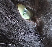 eye of the domestic tiger by nattyb
