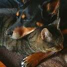 Cats Make the BEST Pillows! by Asoka