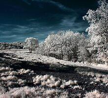 Infrared Landscape by Joshua Doutt