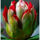 In Bud by Trevor Kersley