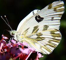 Gold Dust Butterfly by SB  Sullivan