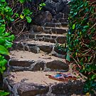 Steps to the Beach by Barbara  Brown