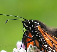 Monarch* @ by ChereeCheree