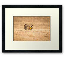 Prairie Chicken 2013-13 Framed Print