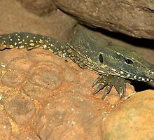 Water Lace Monitor by Aussiebluey