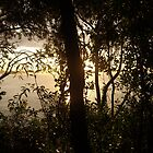 Noosa Sunset by nattyb